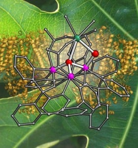 This illustration depicts a metal cluster prepared in the Agapie group on a background of photosystem II, the protein complex that performs photosynthesis in leaves. Credit: Emily Tsui