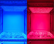 Investigating the effect of different wavelengths of light. Image by Antony Dodd/University of Bristol