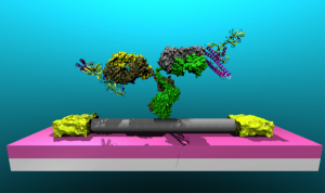 AN illustration of a Lyme antibody attached to a carbon nanotube.