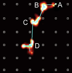 A rat's imagined trajectory from point A to its chocolate reward at point D. Unique combinations of the brain's place cells fire (red lights) in sequence to represent each part of the path (A, B, C, D) that the rat will take. Image compiled over a few milliseconds.