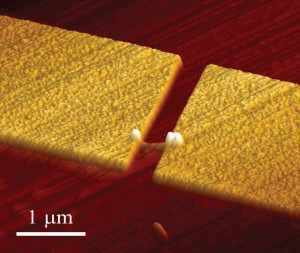 An atomic force microscope image of a nanowire single photon emitter. Credit: Pallab Bhattacharya