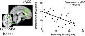 Relationship between striatal FC and superiority illusion. A significant negative relationship between left SMST FC with dACC and superiority illusion can be seen (r = −0.57, P = 0.0035). Copyright © PNAS, doi:10.1073/pnas.1221681110