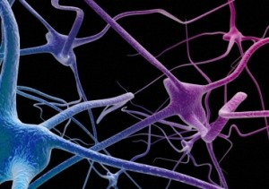 An artist's impression depicting a network of neurons of the nervous system.