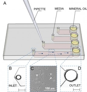 Illustration of adding sperm samples into the microchannels of space-constrained microfluidic sorting (SCMS) system from the inlets. SCMS system with different channel lengths is assessed for sperm exhaustion and effective sperm sorting. Microchannels are prefilled with media prior to loading sperm. The outlet is then covered with mineral oil to avoid evaporation. Image courtesy of BWH Bio-Acoustic Mems in Medicine Laboratory