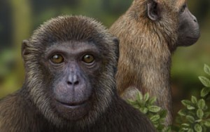 Artist's reconstruction of Rukwapithecus (front, center) and Nsungwepithecus (right).