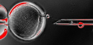 The nucleus of a cell containing an individual's DNA was transplanted into an egg cell that has had its genetic material removed.