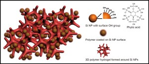An illustration of a new battery electrode made from a composite of hydrogel and silicon nanoparticles (Si NP). Each Si NP is encapsulated in a conductive polymer surface coating and connected to a three-dimensional hydrogel framework.