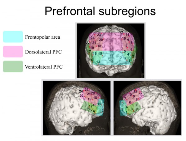 Prefrontal subregions play distinct roles in mediating anxiety and performance under maintained psychological stress. © Ryu Takizawa.