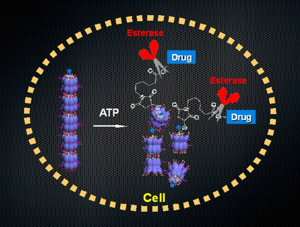The nanocarrier, formed by the assembly of biological machine GroEL, when taken up into cells breaks up upon binding with intracellular ATP and exposes a drug-appended guest protein to the intracellular environment containing enzymes, which then cleave off a linker to liberate drugs from the protein scaffold. © Takuzo Aida.