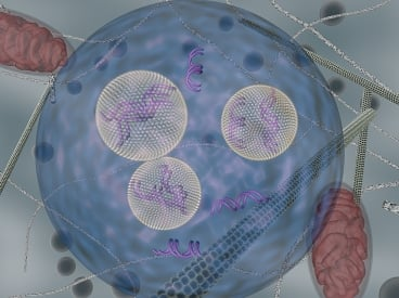 Lipid nanoparticles (carrying siRNA) are shown as they are transported inside cells using endocytic vesicles.  Image: Daria Alakhova and Gaurav Sahay