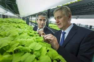 Professor Vidadi Yusibov and Professor Andre Sharon (from left to right) in the fully automated plant factory.