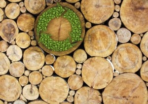 Forest Products Journal A special issue of Forest Products Journal considers 15 processes where woody biomass was turned into liquid fuel, burned directly to create heat, steam or electricity, or processed into pellets for burning