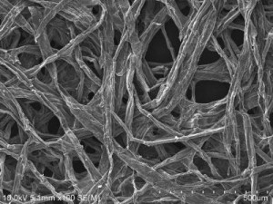 A sliver of wood coated with tin could make a tiny, long-lasting, efficient and environmentally friendly battery. Credit: Maryland NanoCenter