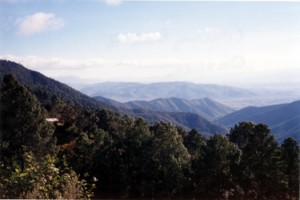 Mathews studies climate change effects in the forests of Oaxaca.