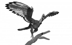 This is an artist's impression of how Archaeopteryx might have looked sporting the pigmentation revealed by the new study. Credit: University of Manchester