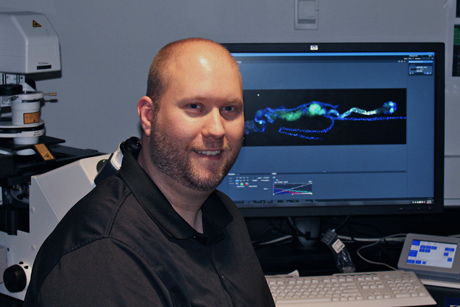Associate professor of entomology Nicolas Buchon with an image of the fruit fly digestive tract taken on a confocal microscope.