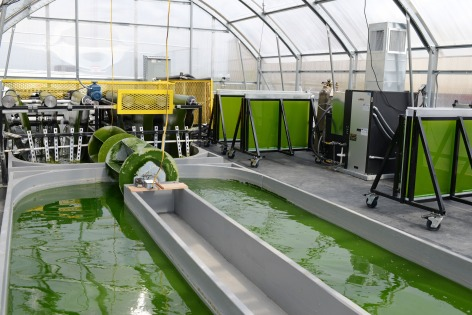 A greenhouse at the ISU BioCentury Research Farm houses new technology that simplifies the cultivation of algae. Photo courtesy of the Center for Crops Utilization Research.