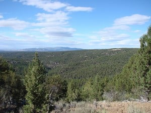 A view from Juniper Mountain, looking toward South Mountain, shows a landscape heavily populated with invasive western juniper trees. Photo by Kirk Davies.