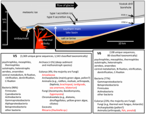 Schematic cross-section of Lake Vostok (above), drawn to scale (based on a radar study of Lake Vostok along the glacial flow line to the ice core drill site [2]) and metagenomic/metatranscriptomic summary (below). Credit: PLoS ONE 8(7): e67221. doi:10.1371/journal.pone.0067221