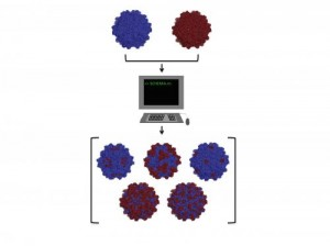 Rice University researchers adapted a computer algorithm to find the parts of two distantly related adeno-associated viruses that could be recombined into new and useful viruses for gene therapy. They intend to determine the rules by which custom viruses can easily be designed for therapies. Credit: Benjamin Adler/Rice University