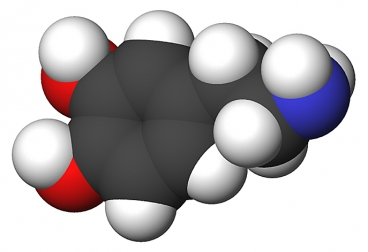 Illustration of the chemical structure of a molecule of dopamine. Image credit: Wikipedia/sbrools