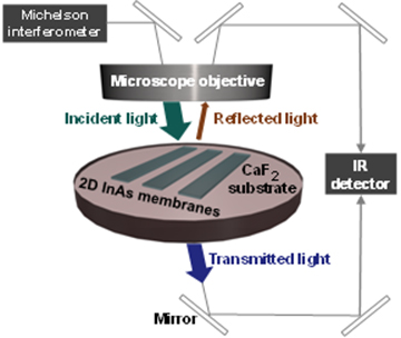 In this FTIR microspectroscopy study, light absorption spectra are obtained from measured transmission and reflection spectra in which the incident light angle is perpendicular to the membrane.