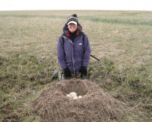 USU ecologist Karen Beard poses beside a tundra swan nest in Alaska's Yukon-Kuskokwin Delta. Beard is leading a $1.5 million NSF-funded study on the effects of climate-induced trophic mismatch in the massive region of wetland tundra.