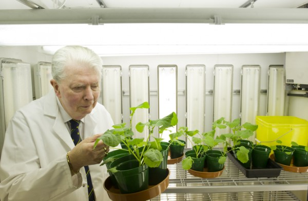 Plants that breathe nitrogen. Credit: University of Nottingham
