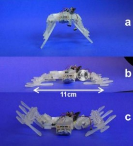 STAR at different sprawl angles. a) Positive sprawl angle. b) Zero sprawl angle. c) Negative sprawl angle. Credit: STAR, A Sprawl Tuned Autonomous Robot, David Zarrouk et al.