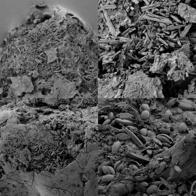These are scanning electron microscope images of degraded plastic particles showing examples of surface textures on sampled plastic particles. Credit: Current Biology, Imhof et al.