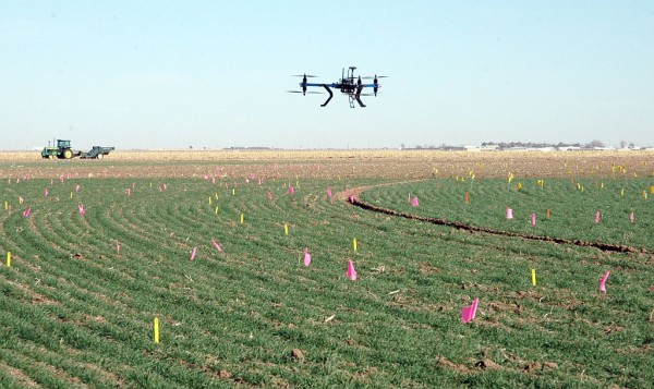A helicopter drone used by Dr. Charlie Rush, Texas A&M AgriLife plant pathologist in Amarillo, flies over a wheat field to track disease progression. (Texas A&M AgriLife Research photo by Kay Ledbetter)