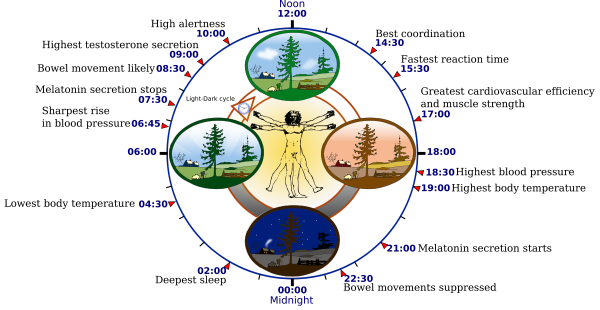 Some of the major aspects of human circadian clock. Image: Wikipedia