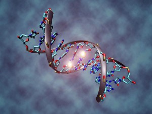 """DNA methylation serves as an epigenetic """"code"""", which can shift in response to environmental factors, such as smoking Image by Christoph Bock (Max Planck Institute for Informatics) (Own work)"""