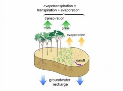 This is a diagram illustrating evapotranspiration, a fundamental process involved in surface renewal. Credit: JoVE, the Journal of Visualized Experiments