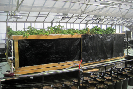 An aeroponic growth chamber constructed by Cornell virologist Keith Perry and Uihlein Farm manager Chris Nobles. Credit: Keith Perry