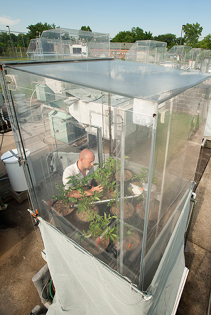 Agricultural engineer David Fleisher studies water-stressed potato plants in a soil-plant-atmosphere research chamber that controls carbon dioxide and irrigation levels. Results from the study reveal how climate change affects potato plant growth. Photo by Stephen Ausmus.