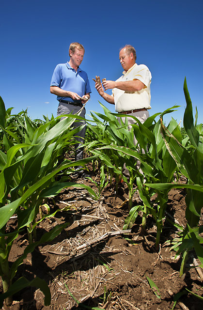 Soil scientists Brian Wienhold (left) and Gary Varvel compare corncob residue in various stages of decomposition in a no-till field in Lincoln, Nebraska. In this study and several others, ARS researchers were surprised to learn how much carbon corn and switchgrass sequester in the soil between 12 inches and 5 feet deep. Photo by Peggy Greb.