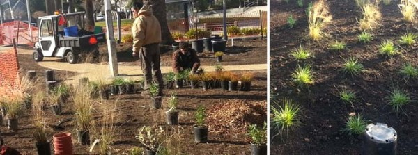 Workers at University Village in Albany replace turf with drought-tolerant plants, a decomposed-granite pathway and a picnic-table area. (Photo courtesy of Thomas Bilskemper)