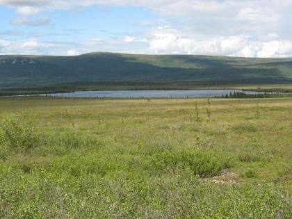 A photo of a Alaska's shrub tundra environment today showing birch shrubs in the foreground and spruce trees scattered around Eight Mile Lake, located in the foothills of the Alaska Range. Photo courtesy Nancy Bigelow, University of Alaska Fairbanks