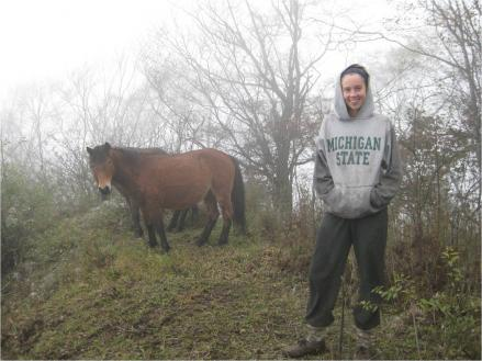 Vanessa Hull, a doctoral student in MSU's Center for Systems Integration and Sustainability, showed that horses have been identified as a significant threat to panda survival. Courtesy of MSU - See more at: https://msutoday.msu.edu/news/2014/livestock-found-ganging-up-on-pandas-at-the-bamboo-buffet/#sthash.VvILWH5W.dpuf