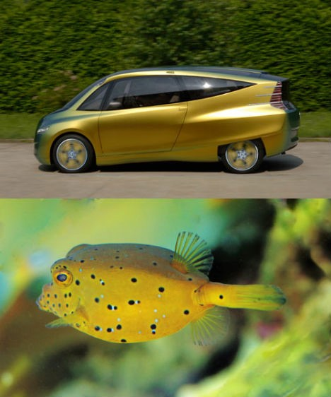 Mercedes-Benz Bionic brand model was inspired by the appearance of yellow boxfish (Ostracion cubicus)