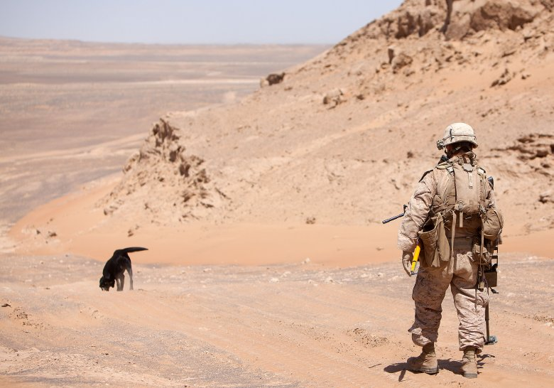 "A U.S. Marine patrols through Afghanistan. The U.S. Naval Research Laboratory (NRL) has created a video game to help military dog handlers practice reading their dog's behavioral cues and giving commands. Says Moses, ""Not only should the dog be taking cues from the handler, the handler should be taking cues from the dog."" (Photo: Defense Video and Imagery Distribution System)"