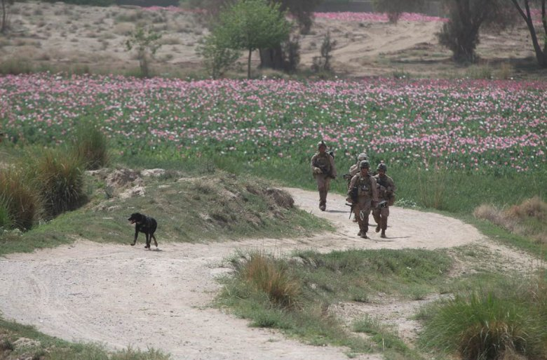 "U.S. Marines patrol through poppy fields in Afghanistan. The U.S. Naval Research Laboratory (NRL) has created a video game for practicing IED detection with a dog. Now that the U.S. Marine Corps is closing its facilities, Adam Moses of NRL says, ""My hope is that with something like this, all that other research and institutional knowledge could at least be kept around and studied further."" (Photo: U.S. Marine Corps)"