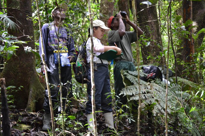 Rice University graduate student Onja Razafindratsima takes data with members of her research team in a Madagascar rainforest. The team spent three years studying the relationship between fruit-eating lemurs and species of trees they help survive by dispersing their seeds. (Photo courtesy of Onja Razafindratsima/Rice University)
