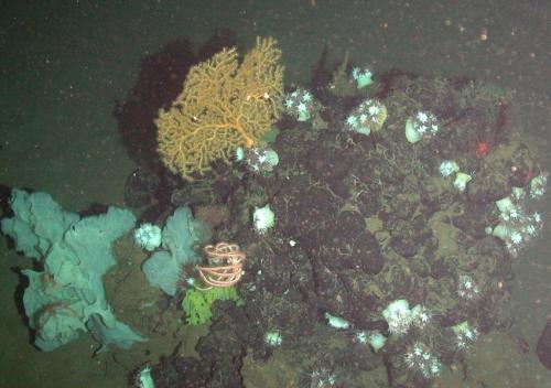 Seafan mound. Credit: National Oceanography Centre, Southampton