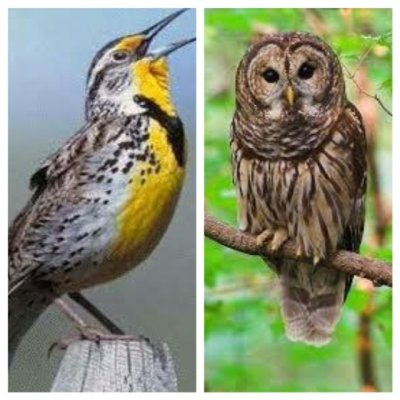 "New research suggests there is more to the owl""/""lark"" dichotomy. Image source: Grammie Gabs"