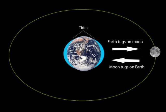 It takes two to tango. The moon's gravity raises a pair of watery bulges in the Earth's oceans creating the tides, while Earth's gravity stretches and compresses the moon to warm its interior. Illustration: Bob King