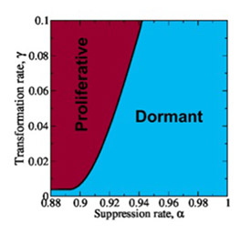 Researchers from Princeton University have developed a computer model that simulates the competition between tumor dormancy and proliferation under various conditions. Through a series of simulations, they generated a phase diagram, pictured here, that could be used by experimentalists to predict when the tumor will be in a proliferative or dormant state. (Image courtesy of Salvatore Torquato Lab)
