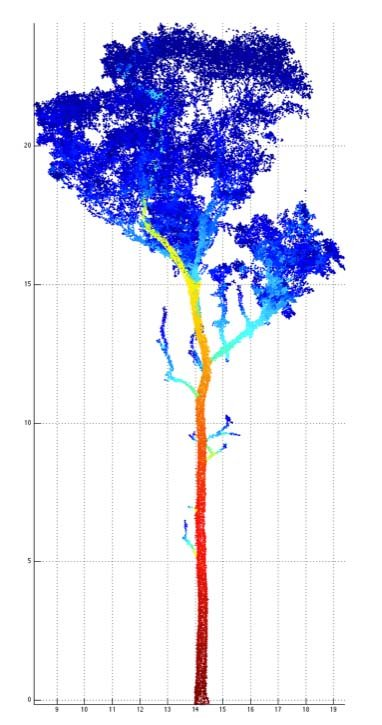 Lidar point cloud from a scanned Eucalyptus tree of about 25m in height. The colours represent the size of 'patches' used to cover the points in calculating tree volume (blue being small, red being large).