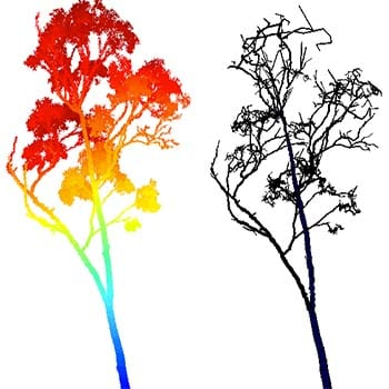 Lidar point cloud from a scanned Eucalyptus tree (left) with colours correlating to point density (blue to red moving from high to low density). On the right is the reconstructed tree volume from which mass can be estimated.